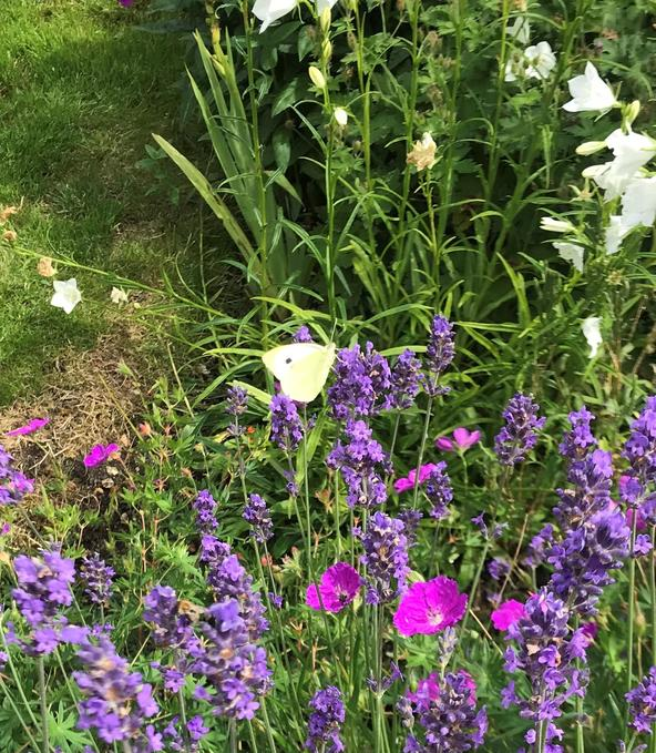 Small White (Cambourne)