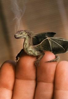 Mrs Irish's pet dragon Toffee
