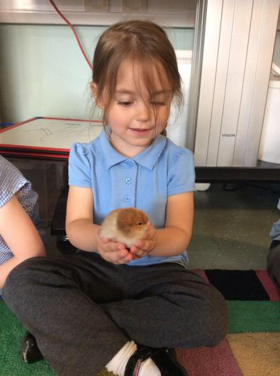 Holding a three day old chick.