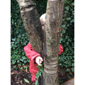 Forest School - playing hide and seek