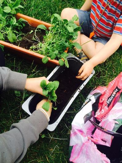 Children planting herbs or anything!