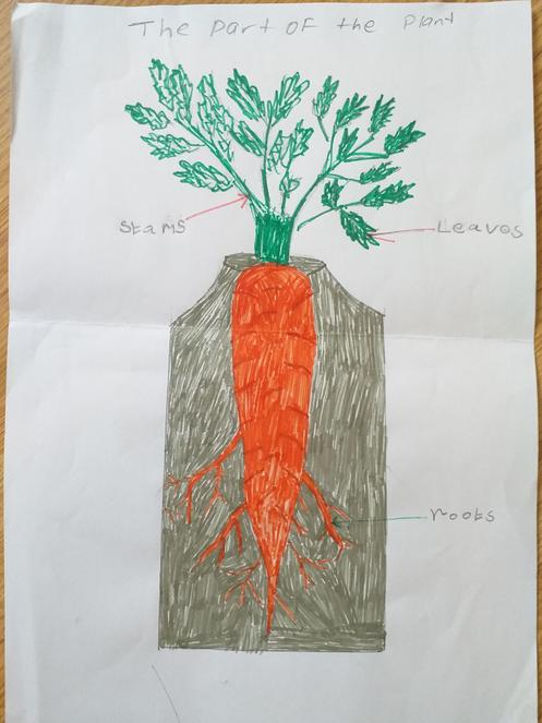Shrihari 2KR - A very accurately labelled carrot.