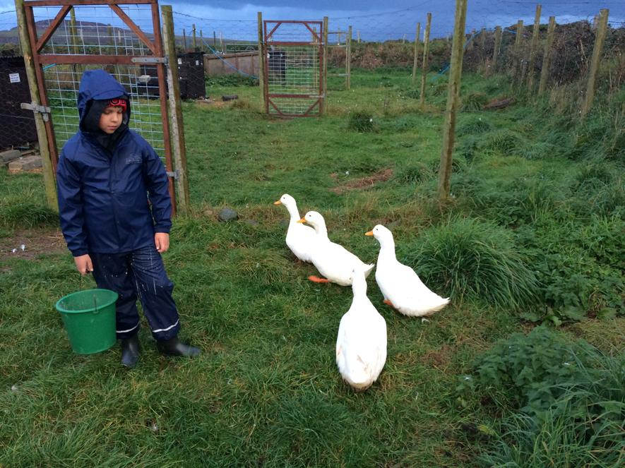 Looking after the ducks.