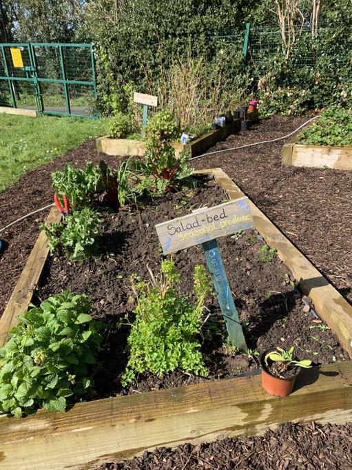Lettuce, peas and radish seeds just planted! 🌱