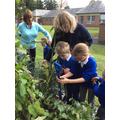 Exploring the school sensory garden.