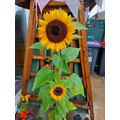 William's sunflowers have grown beautiful at home