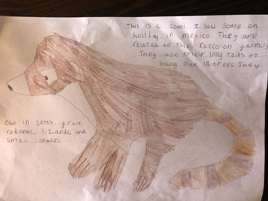 Great facts about a Coati, well done Brooke