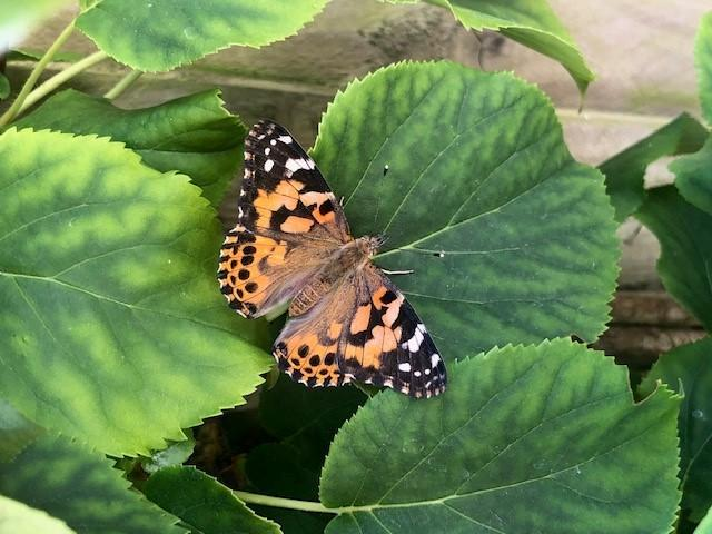Beautiful butterfly spotted by Teddy