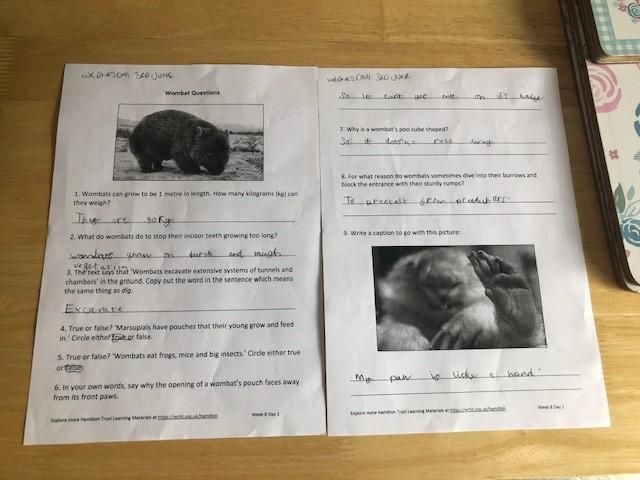 Teddy has been doing his Literacy this week!