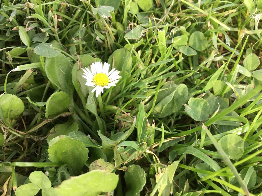 Daisies are an important food source.