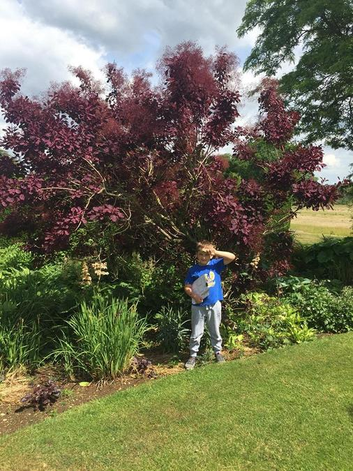 Daniel went on a colour hunt in his garden