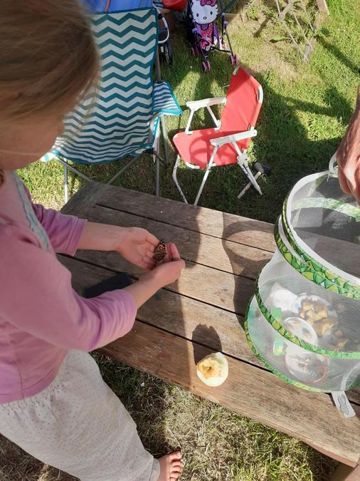 Edie's butterflies have hatched this week!