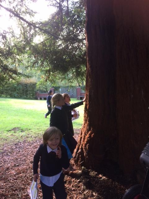 The River School's beloved BIg Ben Tree.