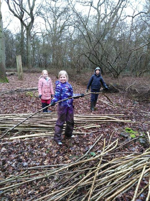 These branches will be used to build a shelter.