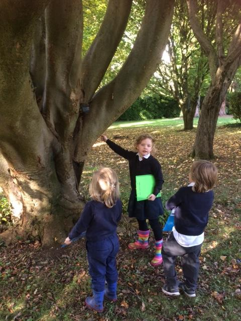 """""""Look, I found a mushroom on this tree!"""""""