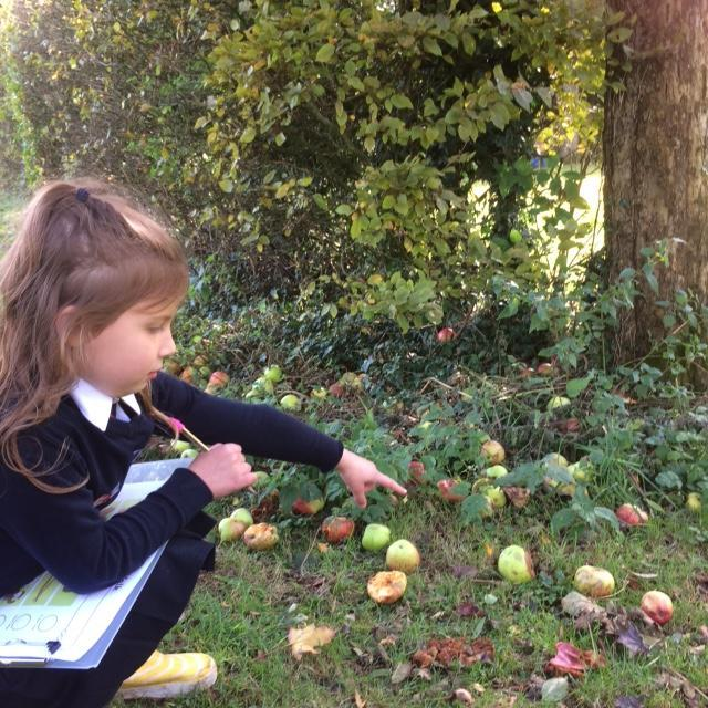 """""""Look at all these apples!"""""""