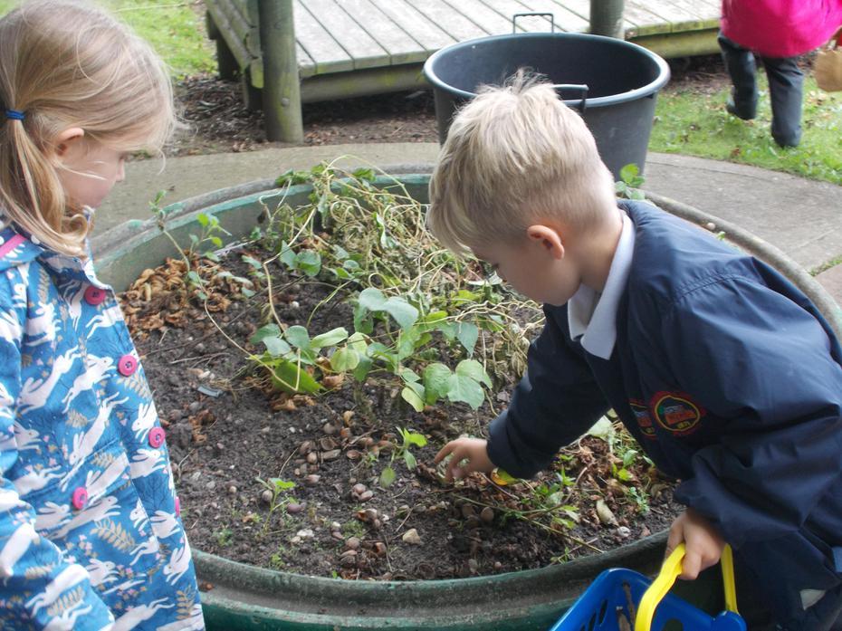 Gardening duty