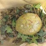 Beech class found a large egg.