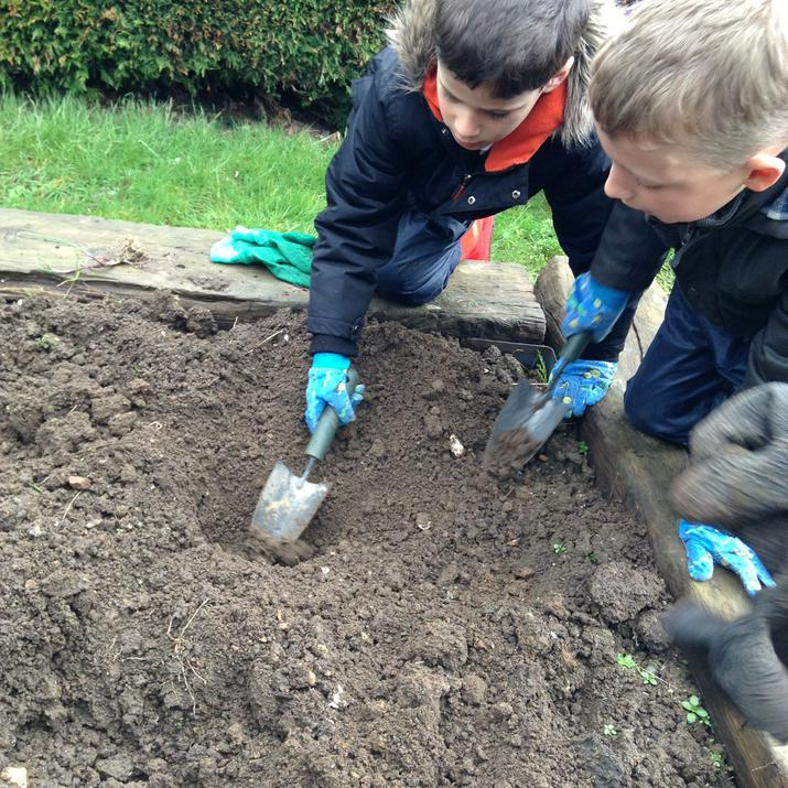 Photo pf pupils planting apple trees