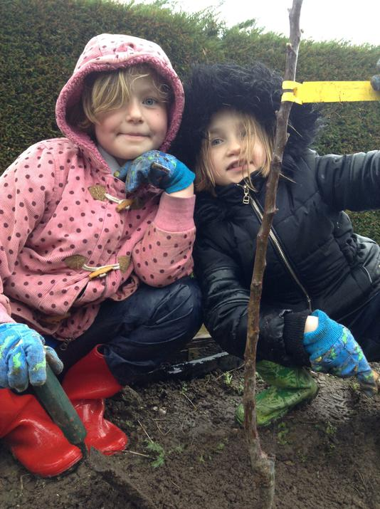 Photo of pupils planting apple trees