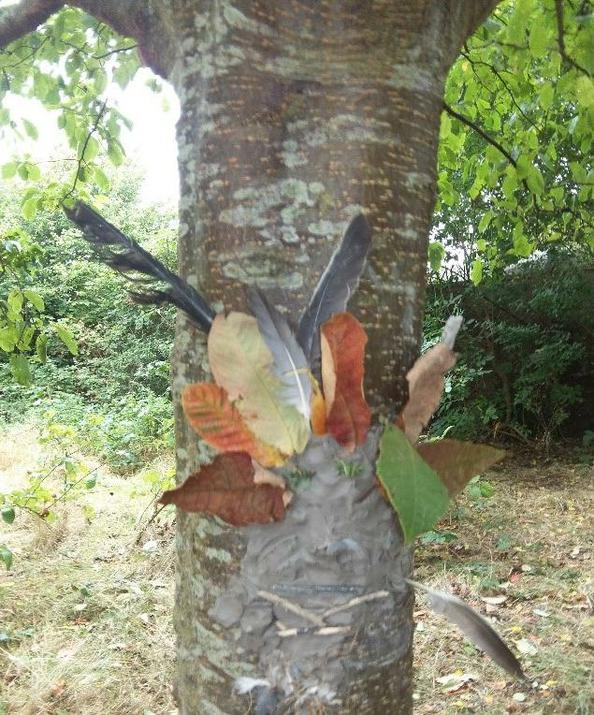 Photo of tree face