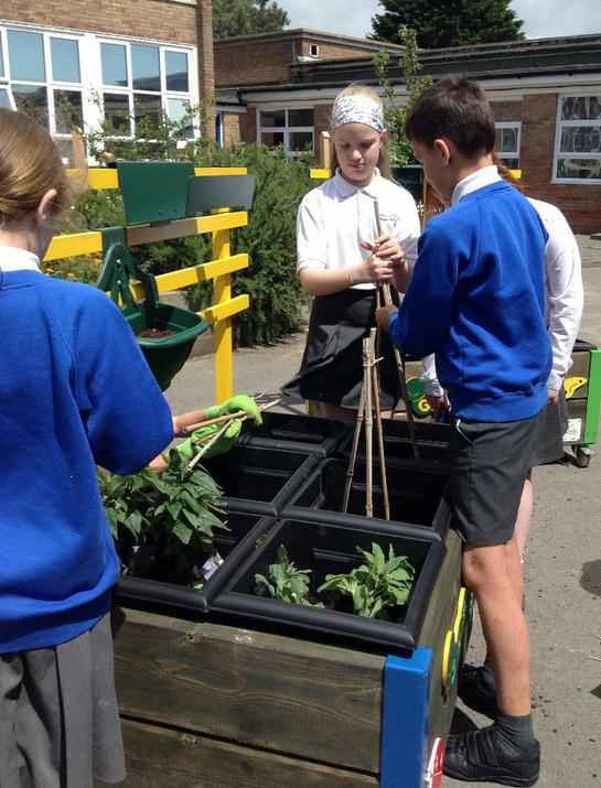Photo of pupils with vegetable plants in raised beds