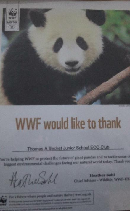 Photo of certificate from WWF for sponsoring an animal