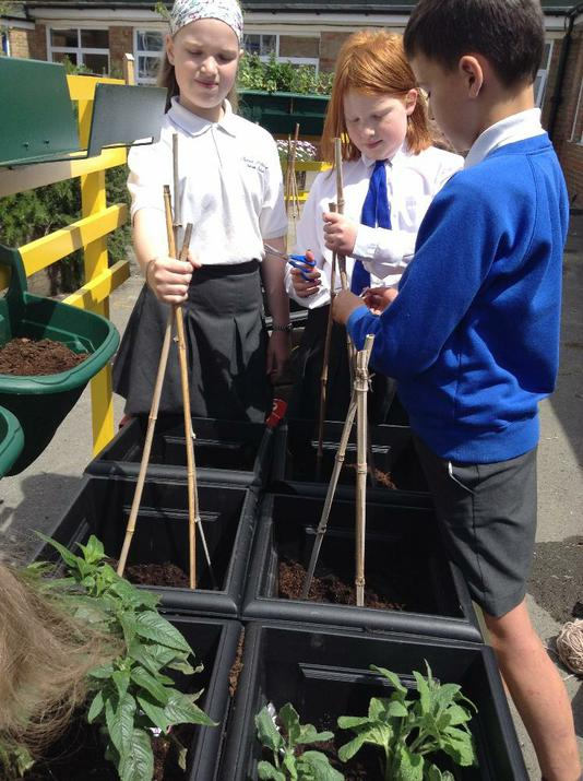 Photo of pupils and raised beds
