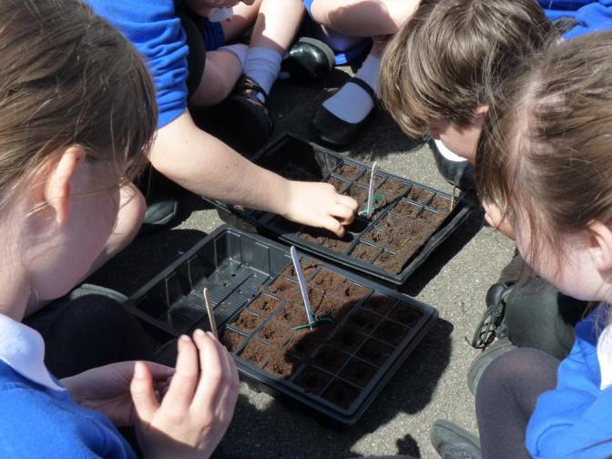Year 4 Space Seeds