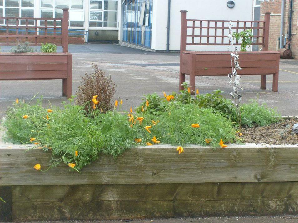 Photo of school flower beds