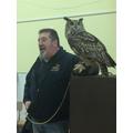 Long eared owl.