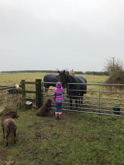 Walking and visiting horses