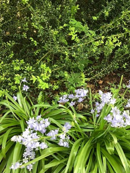 10 . A spring flower.