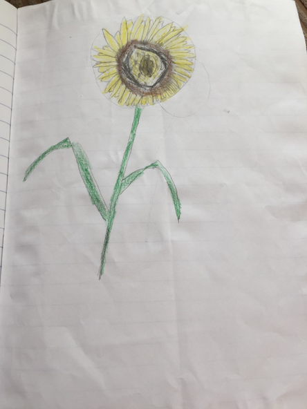 A lovely sunflower by Joshua.