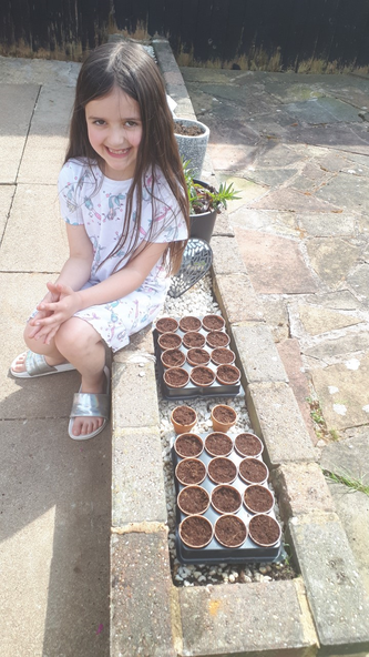 Planting lots of seeds.