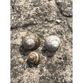Poppy found some snail shells too.