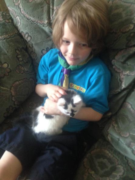 Milo the kitten.