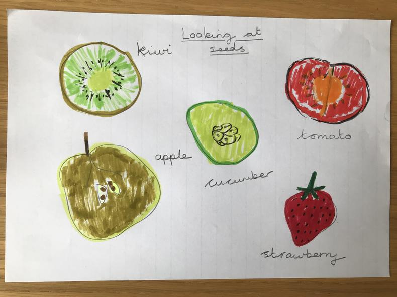 Careful pictures to show the different seeds.