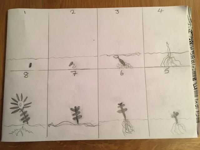 Hollie's life cycle of a plant. Very careful.