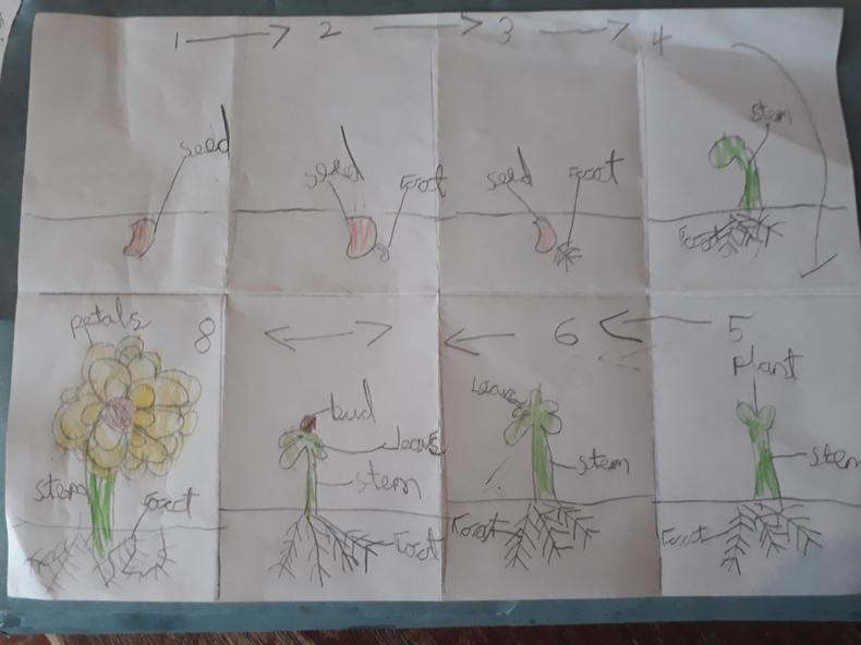 A briliant labelled life cycle by Matilda.