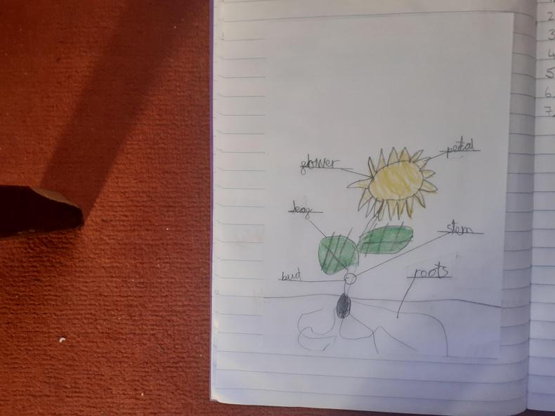 Lovely, careful science work  by George