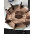 Kylans amazing looking cheesecake
