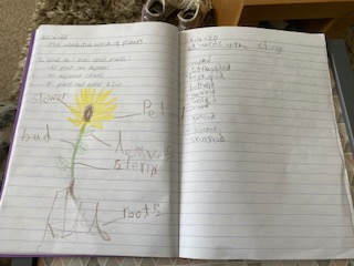Super plant work by Poppy.