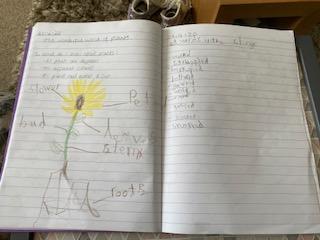 Super plant work by Poppy.