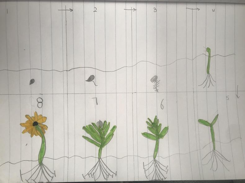 A great life cycle of a plant Remington.