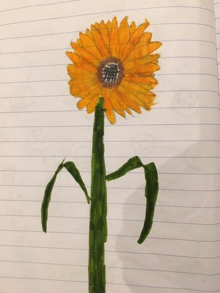Hollie's brilliant sunflower picture!