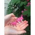 Hattie's favourite flower in her garden.