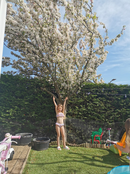 Look at the pretty blossom on this tree!