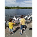 Joshua and his brother feeding the geese