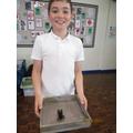 The shedded shell of Boris the tarantula